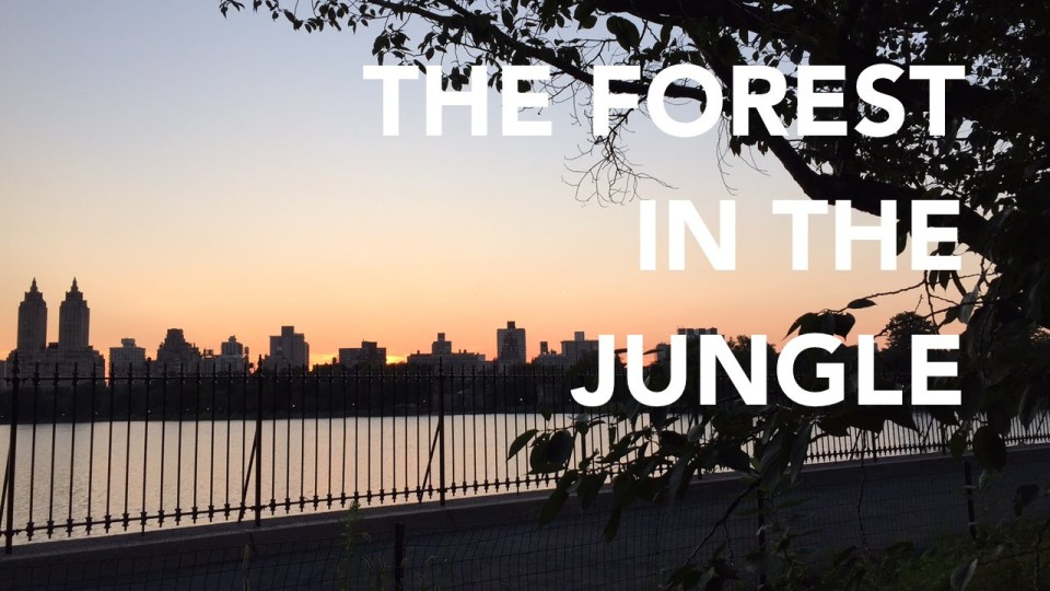 The Forest in the Jungle – a NYC trail running short